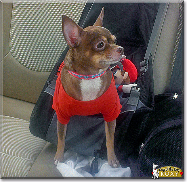 Roxy Marie, the Dog of the Day
